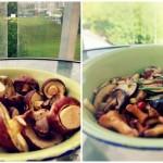 Potrawka z grzybów leśnych z rozmarynem i tymiankiem